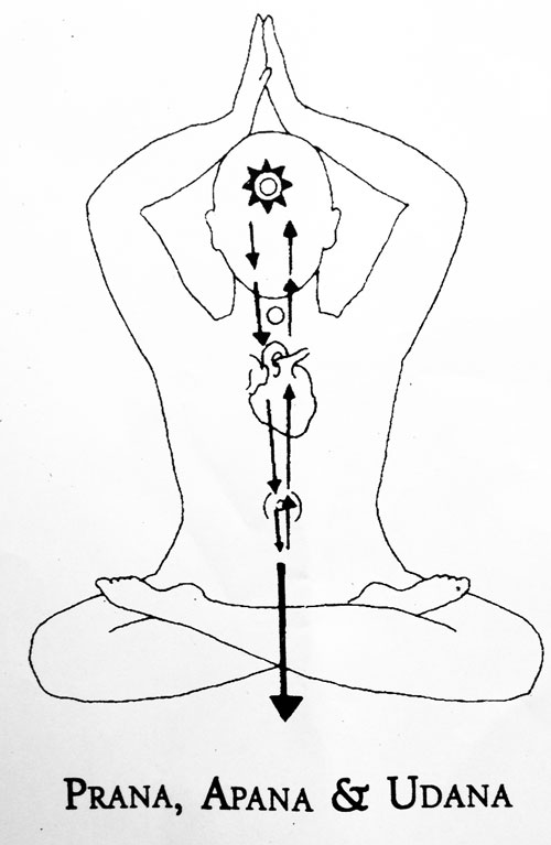 Yogaveda Ayurveda