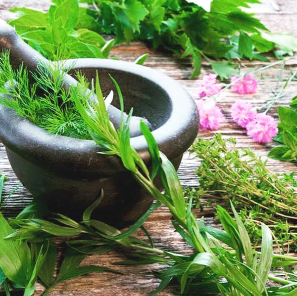Winter Wellness Herbs